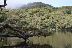 Os quatro lagos Fotos de Stock