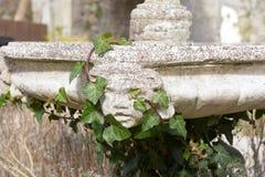Os querubins dirigem na fonte coberta com os ramos e as folhas da hera imagem de stock royalty free