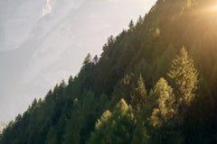 Os raios de sol brilham através da floresta das árvores no luminoso das montanhas Foto de Stock