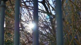 Os raios de sol penetram através das árvores filme