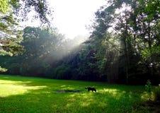 Os raios de Sun que peircing com a manhã enevoam-se em uma floresta foto de stock royalty free