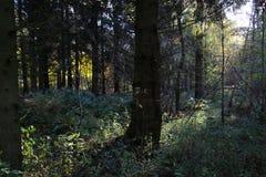 Os raios do ` s do sol bateram o assoalho da floresta foto de stock royalty free