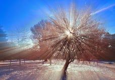 Os raios do sol Imagens de Stock Royalty Free