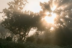 Os raios do sol esticam através dos ramos fotos de stock royalty free