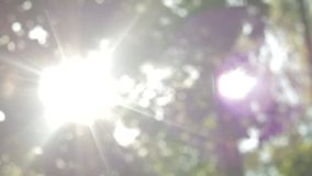 Os raios do sol fazem sua maneira através da folha, bokeh bonito, floresta feericamente, movimento vertical vídeos de arquivo