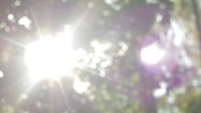 Os raios do sol fazem sua maneira através da folha verde, bokeh bonito do arco-íris, floresta feericamente, movimento descendente vídeos de arquivo