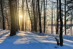 Os raios do sol na floresta do inverno, paisagem do inverno Imagem de Stock Royalty Free