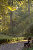 Os raios do sol no parque do outono Imagens de Stock
