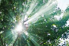 Os raios do sol permeam através dos ramos das árvores w fotografia de stock royalty free