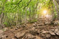 Os raios dos sóis para fazer sua maneira através das folhas de um bosque da faia na inclinação da montagem AI-Petri foto de stock