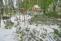 Os ramos da árvore com as folhas verdes da mola quebraram sob o peso da neve e do vento molhados, na área do sono Foto de Stock