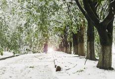 Os ramos das árvores com as folhas verdes da mola quebraram sob o peso da neve e do vento molhados Foto de Stock