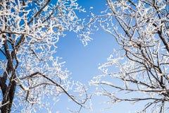 Os ramos das árvores formam uma forma do coração Imagem de Stock Royalty Free