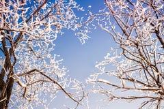 Os ramos das árvores formam uma forma do coração Fotografia de Stock Royalty Free