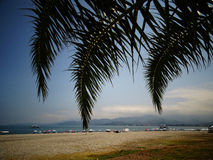 Os ramos das palmas de coco contra o claro Fotografia de Stock
