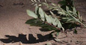 Os ramos das plantas na areia são movidos por um forte vento video estoque