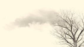 Os ramos de árvore com o céu no sepia tonificam fotografia de stock