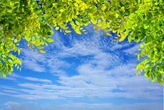 Os ramos de árvore verdes deixam o quadro no céu azul e nublam-se o fundo da natureza Imagem de Stock