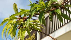 Os ramos de árvore verdes saem da flora fotos de stock royalty free