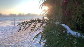 Os ramos de pinheiro cobertos de neve fecham-se acima vídeos de arquivo