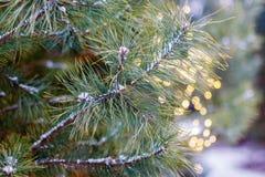 Os ramos de pinheiro densos e macios do inverno estão pendurando no fundo de brilho das luzes do ano novo fotos de stock royalty free