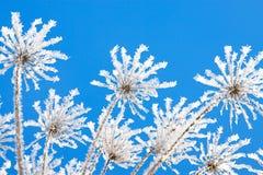 os ramos de plantas secas são cobertos com a neve no inverno foto de stock
