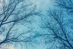 Os ramos despidos da árvore abstrata bonita entrelaçaram sem folhas Para baixo acima, baixo ângulo, vista no inverno fotos de stock royalty free
