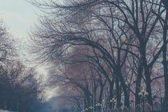 Os ramos despidos da árvore abstrata bonita entrelaçaram sem folhas Para baixo acima, baixo ângulo, vista no outono fotos de stock