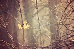 Os ramos do outono de uma árvore vestiram-se no shinin das folhas e dos pingos de chuva Fotografia de Stock Royalty Free