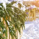 Os ramos dos abeto cobertos com a neve branca quebram através da cerca de madeira Imagens de Stock