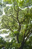 Os ramos e as folhas de árvore criam testes padrões contra o céu foto de stock