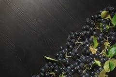 Os ramos enegrecem o melanocarpa de Aronia das bagas do chokeberry na tabela escura Autumn Pattern fotos de stock royalty free