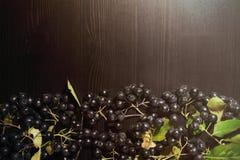 Os ramos enegrecem o melanocarpa de Aronia das bagas do chokeberry na tabela escura Autumn Pattern foto de stock royalty free