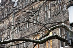 Os ramos escuros cobertos de vegetação criam um appereance assustador imagens de stock