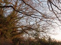 os ramos escuros do por do sol da luz solar dourados iluminam acima desencapado imagens de stock