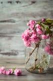 Os ramos maravilhosos de sakura de florescência cor-de-rosa Imagens de Stock