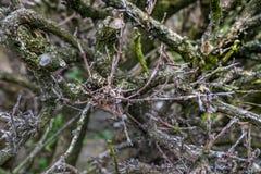 Os ramos que criam testes padrões bonitos fotografia de stock