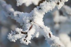 Os ramos são cobertos com os flocos macios brancos da neve no parque do inverno Fotos de Stock