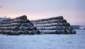 Os rebanhos animais alimentam perto da exploração agrícola no inverno Imagens de Stock