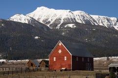 Os rebanhos animais enrolam o cavalo da ruptura que inclina o rancho vermelho da montanha do celeiro fotos de stock royalty free