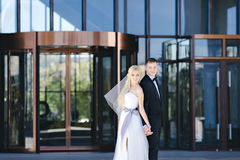 Os recém-casados beijam sob um véu no salgueiro do fundo Foto de Stock Royalty Free