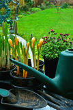 Plantando flores da mola Fotos de Stock Royalty Free