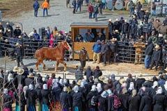 Os relógios da multidão no leilão do cavalo fotos de stock royalty free