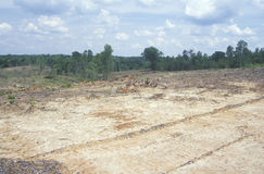Os resultados da madeira clara do corte em Ridge Mountains azul de Virgínia Imagem de Stock Royalty Free