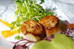 Os scallops seared gourmet com decoram Fotografia de Stock