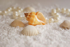 Os seashells e as pérolas imagem de stock royalty free