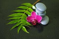 Os seixos cinzentos arranjaram no estilo de vida do zen com uma orquídea, em um ramo da urze e em gotas da água em um fundo preto Imagem de Stock Royalty Free