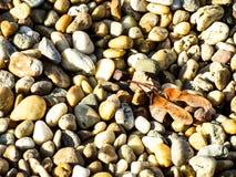 Os seixos pequenos apedrejam o outono das folhas Imagens de Stock Royalty Free