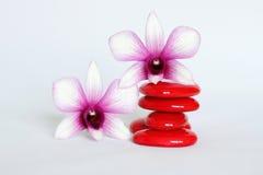 Os seixos vermelhos arranjaram no estilo de vida do zen com uma orquídea bicolor no lado esquerdo e a uma nos seixos em um fundo  Fotografia de Stock