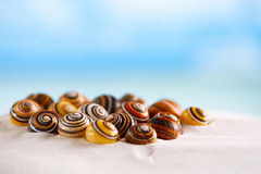 Os shell brilhantes do polymita na areia branca da praia sob o sol iluminam-se Foto de Stock Royalty Free